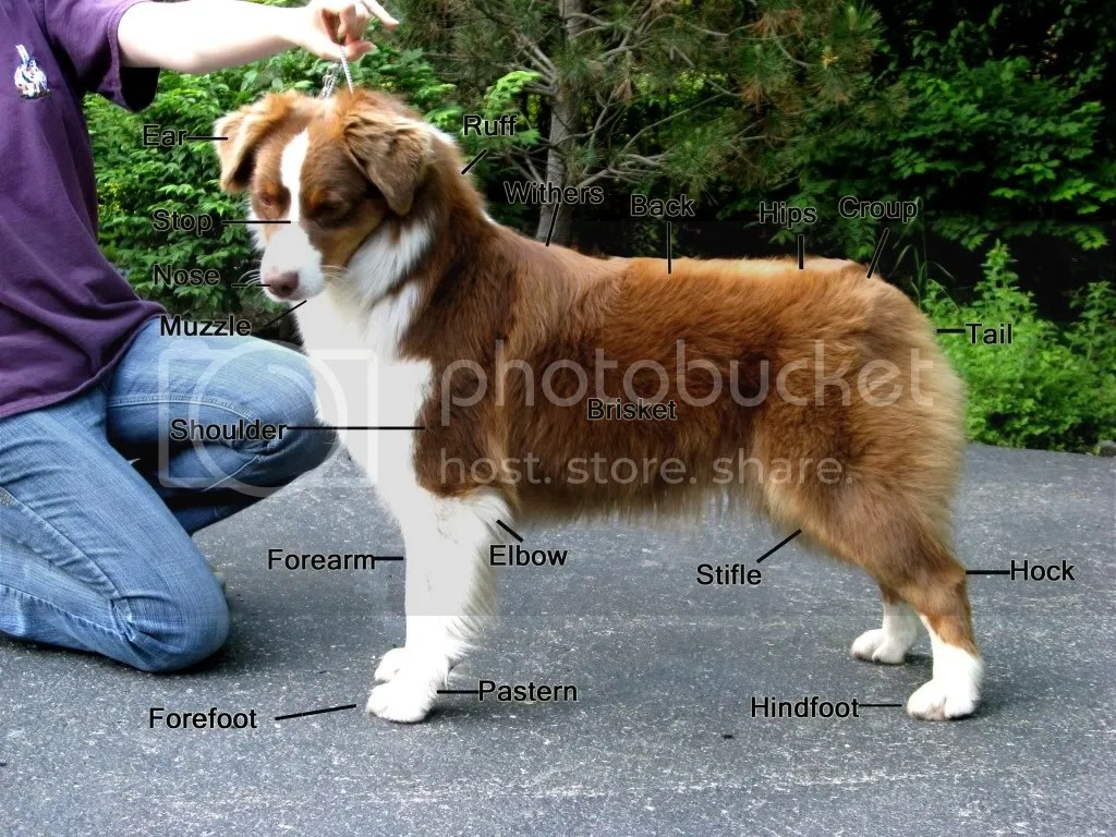 Click Here For A Diagram Of Dog Body Parts