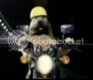 cane moto