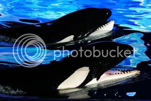 Amazing Sea World Adventure Park