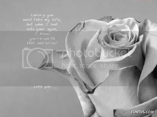 Romantic Collection of Quotes for You