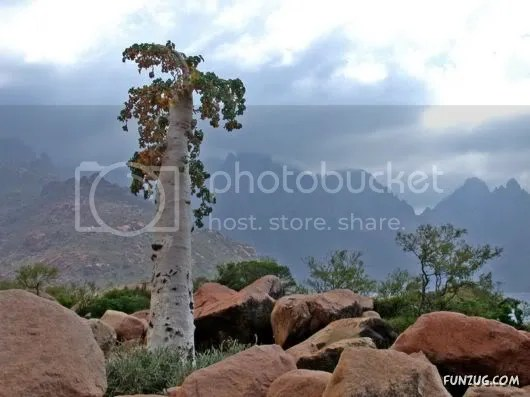 Socotra Island is The Most Bizzare Place on Earth