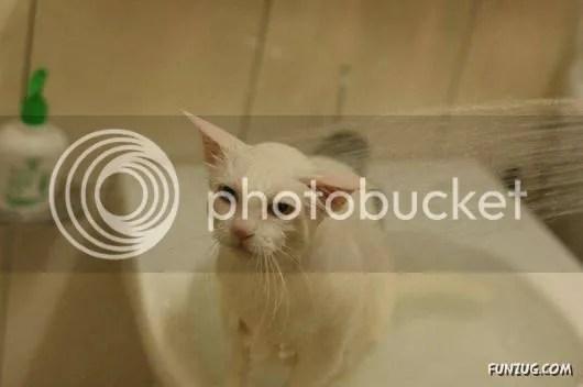 Cute Katty Kittens for Pet Lovers