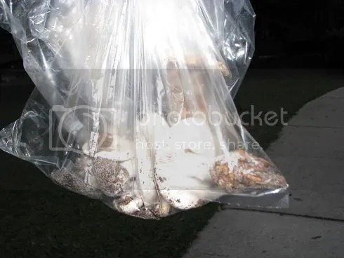 Bag 'O Mushrooms