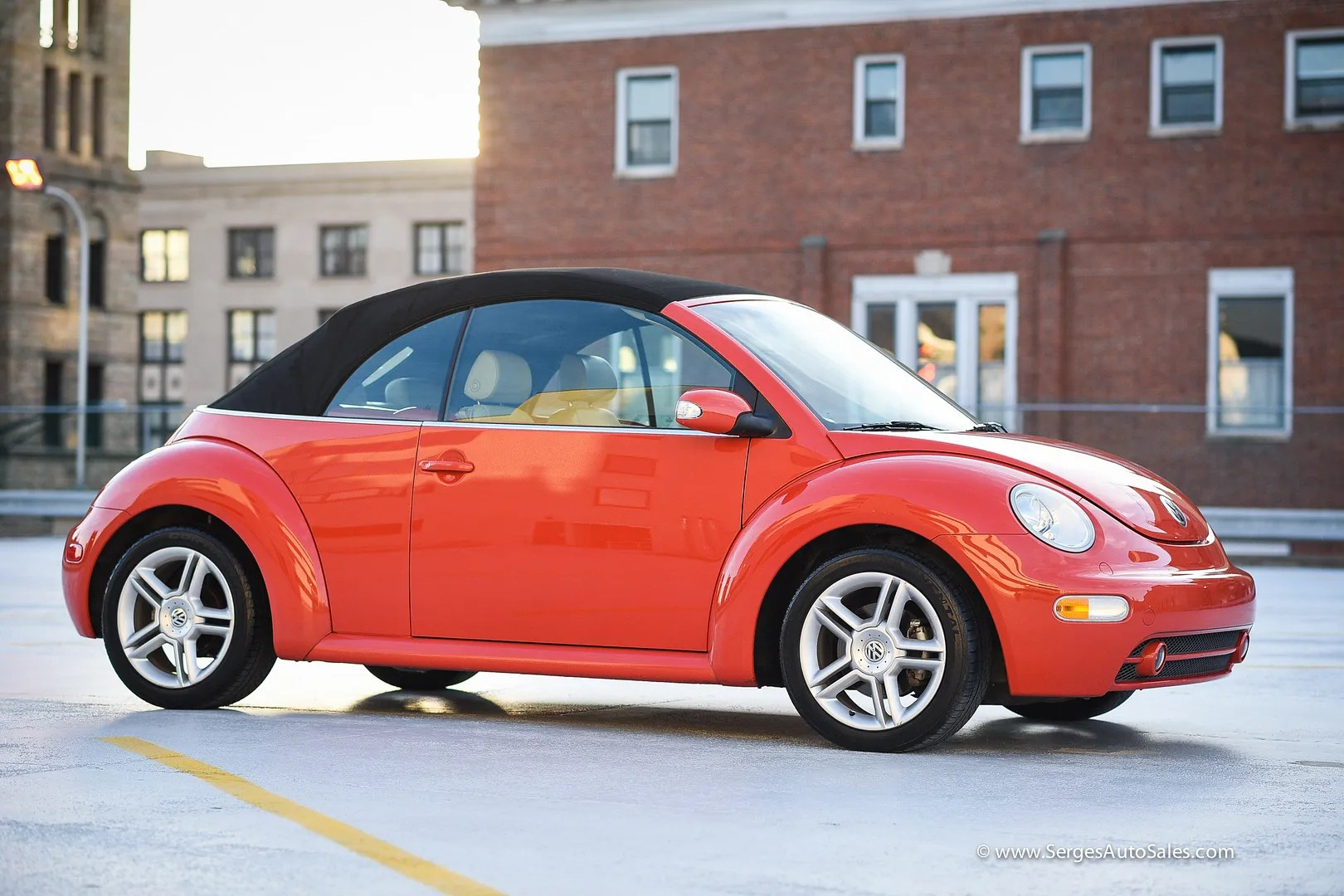 photo beetle-11_zpspgpb59ys.jpg