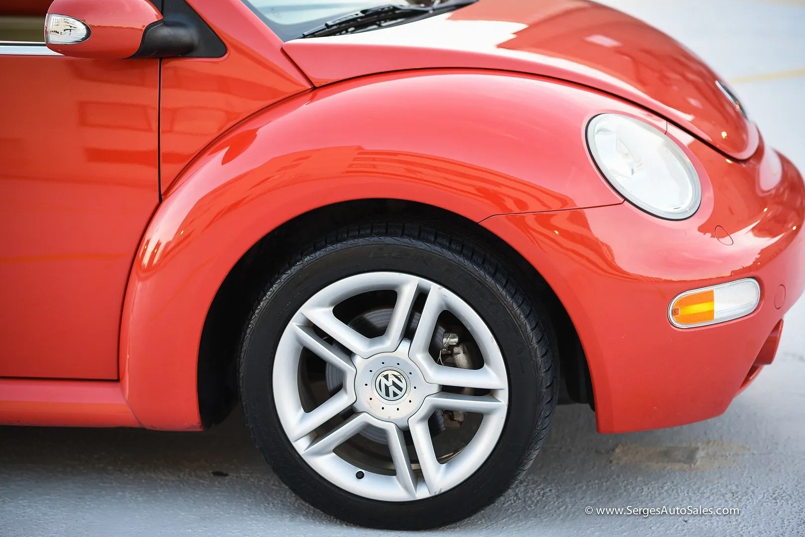photo beetle-59_zps8c5sixgl.jpg