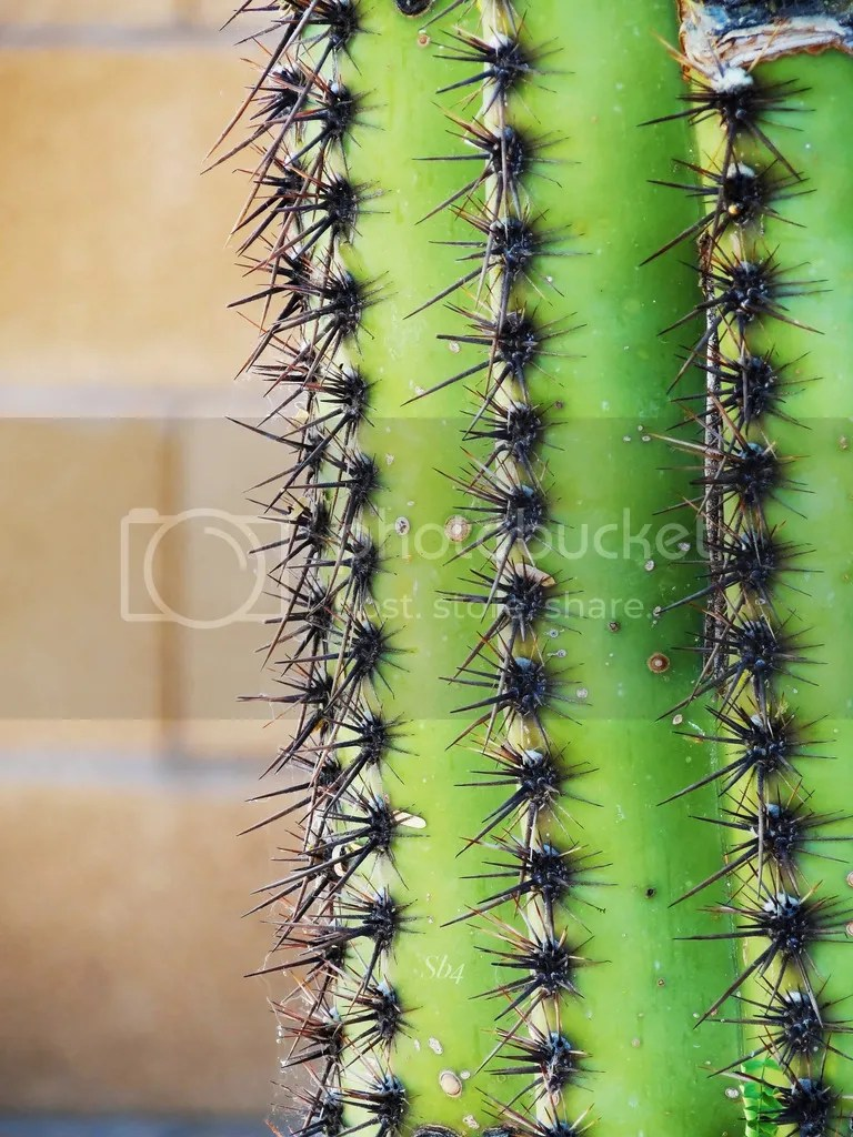 photo April 12 2017 Cactus 2 WM_zps7o7lkdxe.jpg