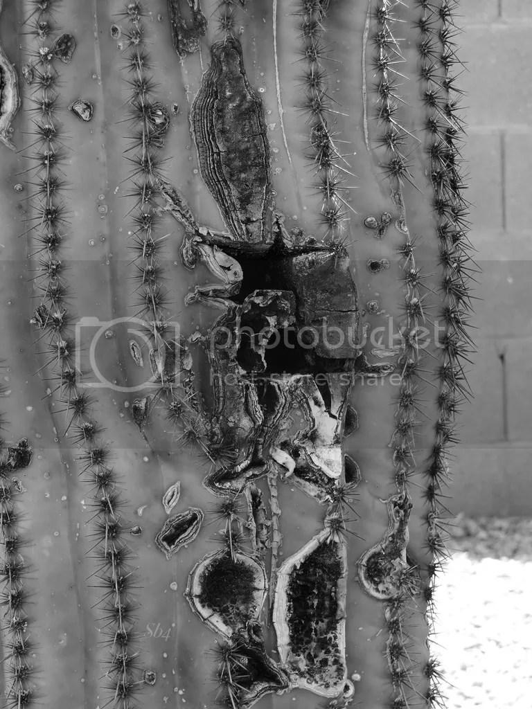 photo April 12 2017 Cactus BW WM_zpsigqtfsh6.jpg