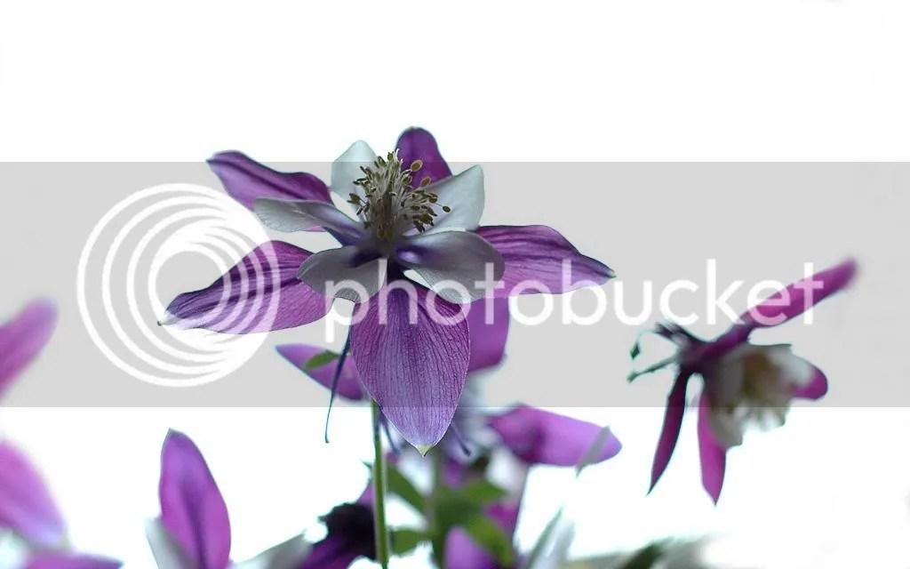 photo Flower1680x1050_zps14015e79.jpg