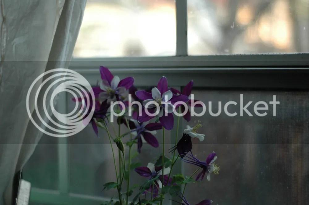 photo FlowerBefore1000x_zps6a90f844.jpg