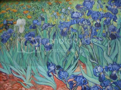 Vincent Van Gohg's Irises