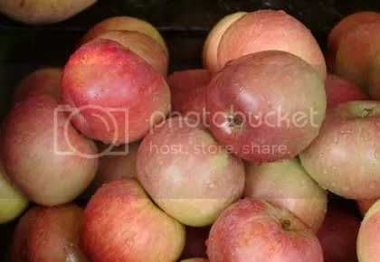 apple fruit photo: apple apple.jpg