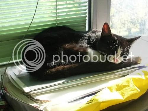 MicioAlex dopo il suo ritrovamento, addormentato sopra delle pratiche nell'ufficio della sua mamy