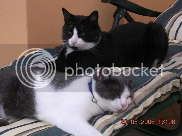 Alex e Pepper si riposano dalle fatiche della giornata