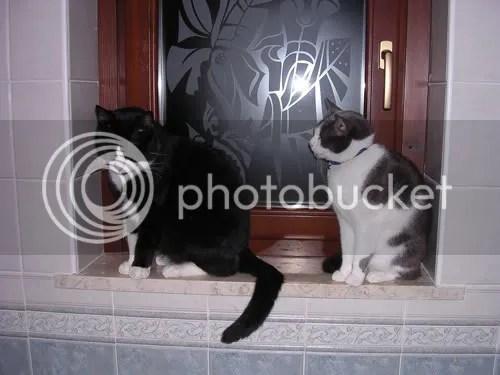 Alex e Pepper sul davanzale del bagno