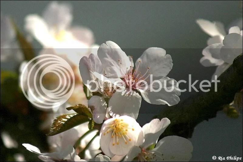 photo IMG_8943_zps5d6d93ad.jpg