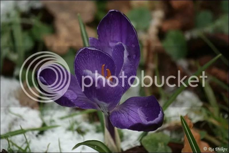 photo IMG_6273_zps5643c62b.jpg