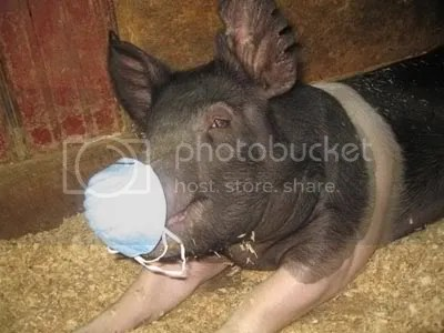 This guy must have heard about the pigs in Alberta who caught flu from humans