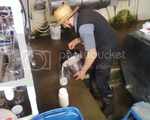 Milk from Amish cows -- from Annielas photos (see link below)