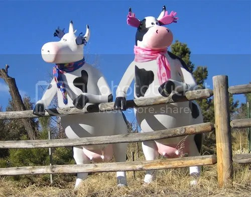 MPC (milk protein concentrate) is to real milk as the sculptures in the picture are to real cows.
