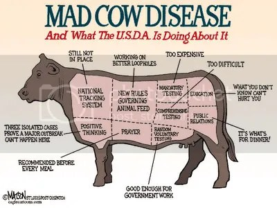 Is it only the cow thats mad?