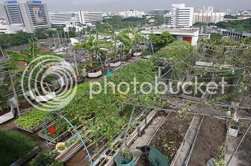 Organic rooftop vegetable and herb garden atop a high-rise in Thailand. Photo: Barbar Walton/EPA/Corbis