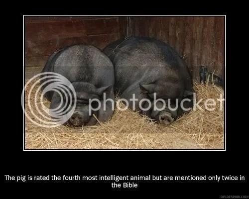 foto - foto lucu binatang