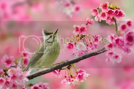 photo bird-photography-sue-hsu-16__880.jpg