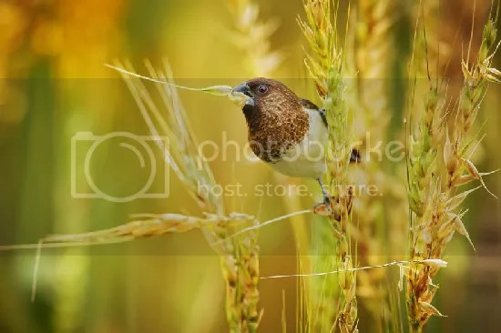 photo bird-photography-sue-hsu-9__880.jpg