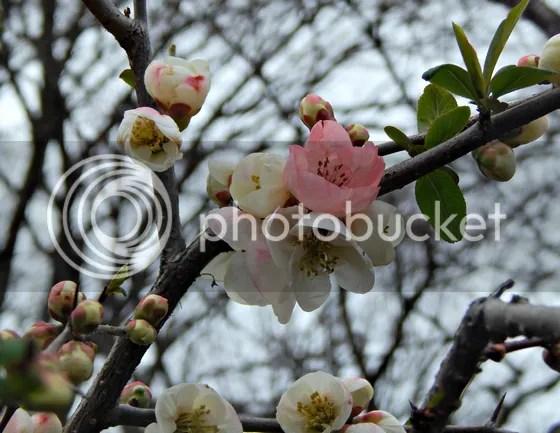 photo japan62.jpg