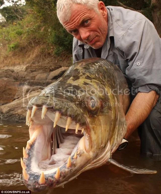 ikan pirana