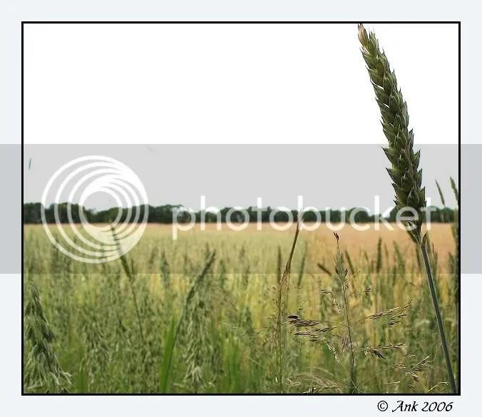 Log20-7-06-3a.jpg