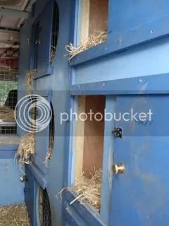 Dog boxes inside van
