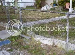 lion fence