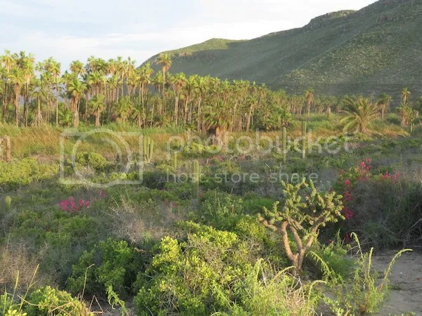 Oasis Playa Las Palmas de San Pedro, near Todos Santos