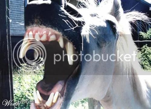 El Pony de Atila