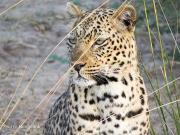 leopardSverre.184848.jpg