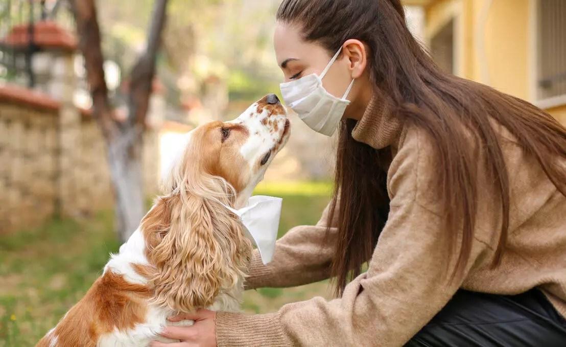 Köpekler virüsün kokusunu alabilir mi? 1