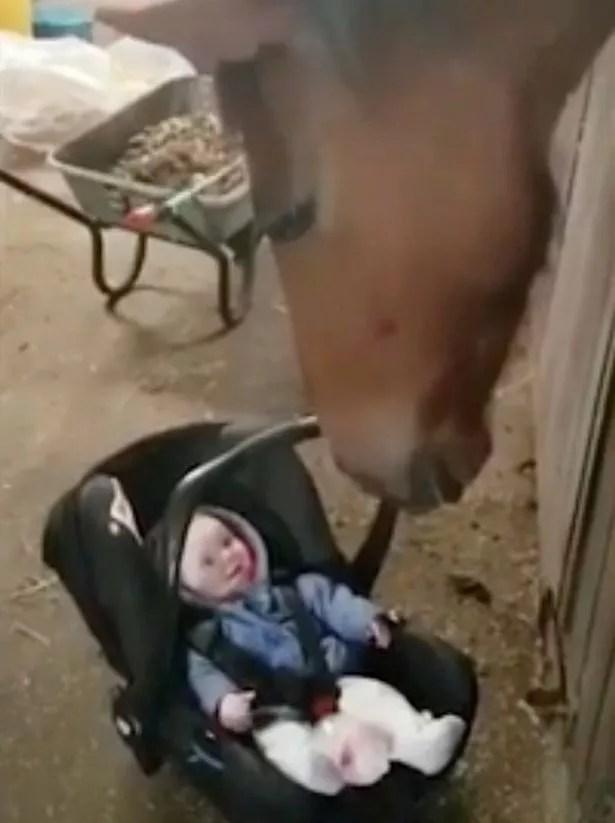 Horse rocks baby in car seat