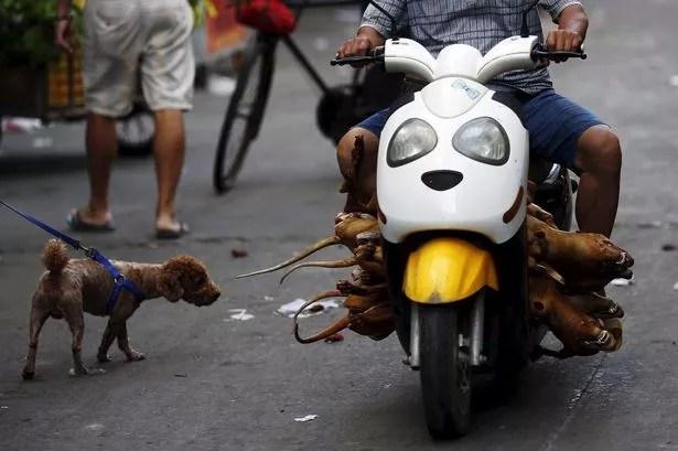 Yulin, Guangxi Autonomous Region