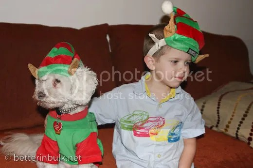 christmas elf hat boy and dog