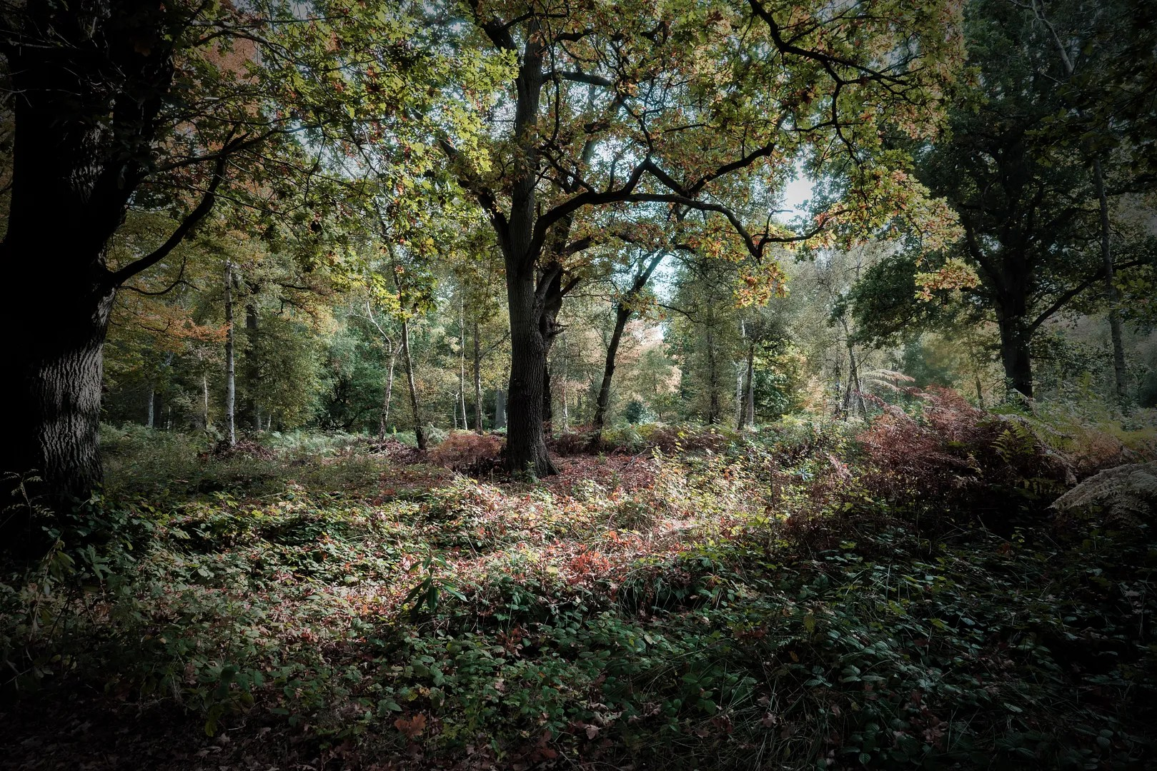 treesandsunlight