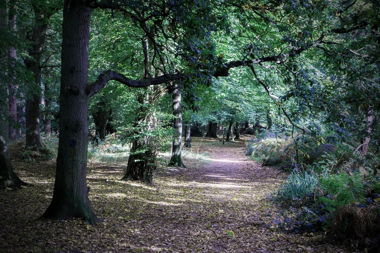 treesandsunlight3