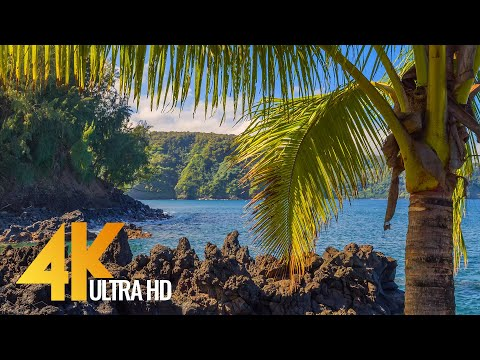 Tropical Beaches of Maui Island - 4K Relaxation Video with Waves Sounds and Birds Song - Part 3