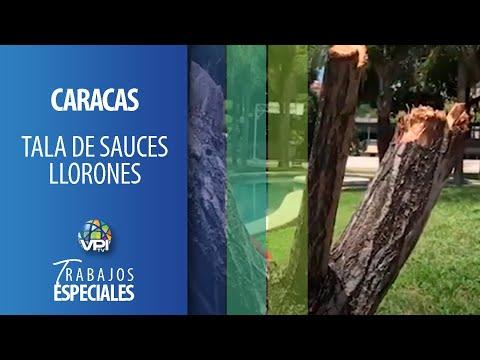 Especial - Tala de Sauces Llorones: Están acabando con el inventario de Caracas - VPItv