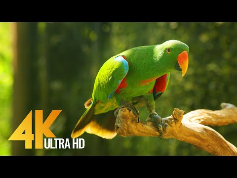 Incredible Bali in 4K UHD, Indonesia - Short Preview Video with Relaxing Music