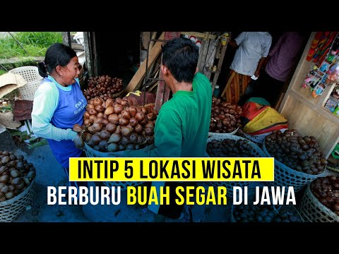 Lima Lokasi Wisata Berburu Buah Segar di Jawa
