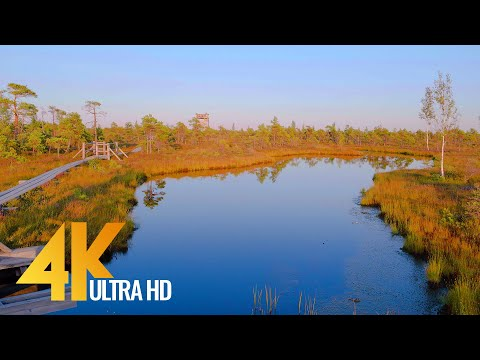 Beauty of Latvian Nature - 4K Walking Tour - Short Preview Video
