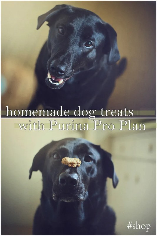 DIY Dog Treats - with added nutrition!