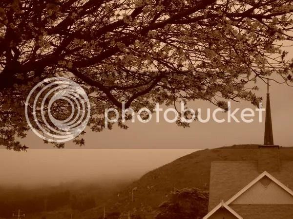 Plum trees a-blossom
