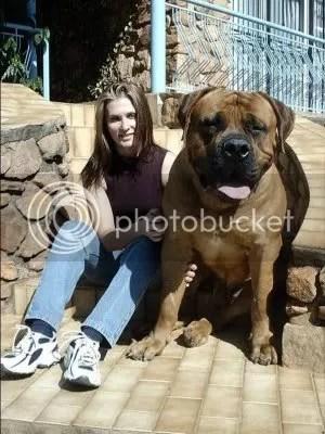 binatang raksasa, binatang besar